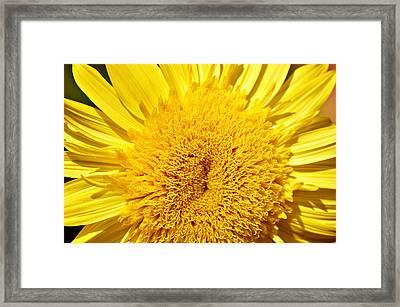 Starburst Lemon Aura Framed Print by Julie Palencia
