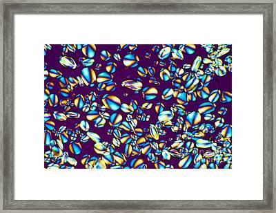 Starch Grain, Light Micrograph Framed Print