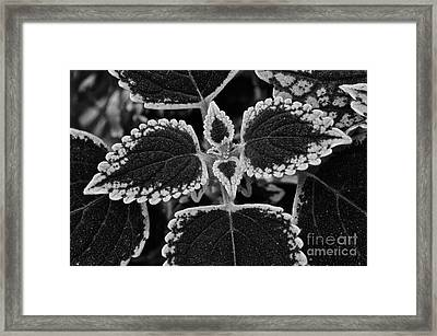Stardust Petals Framed Print