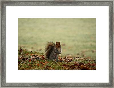 Framed Print featuring the photograph Stare Down by Lynn Hopwood