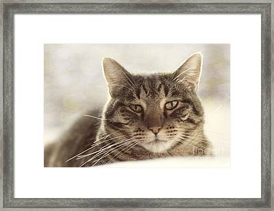 Stare Into My Eyes Framed Print by Juli Scalzi