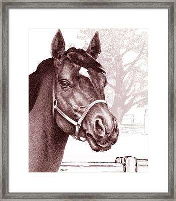Stare Of The Stallion Framed Print by Patricia Howitt