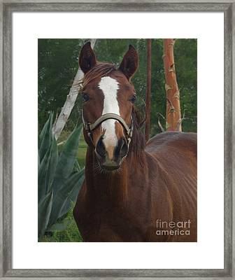 Stared Down Framed Print by Peter Piatt