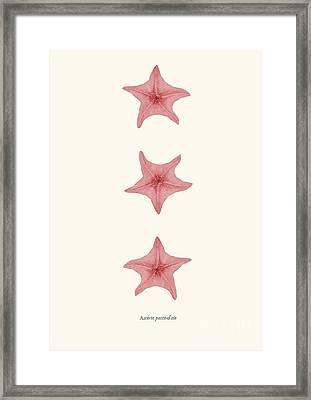 Starfih Pink Sea Vintage Framed Print