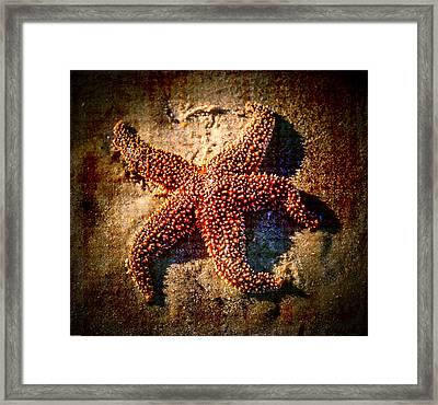 Starfish 2 Framed Print by Kathleen Scanlan