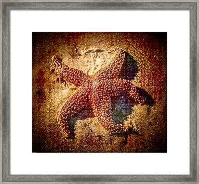 Starfish 3 Framed Print by Kathleen Scanlan