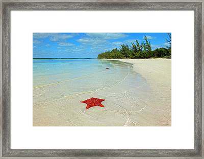 Starfish 5 Of Bottom Harbour Sound Framed Print
