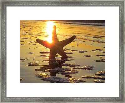 Starfish And Bubbles Framed Print by Nikki McInnes