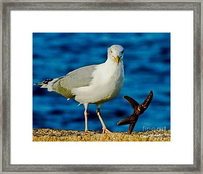 Starfish And Seagull Dance On The Rocks Framed Print by Carol F Austin