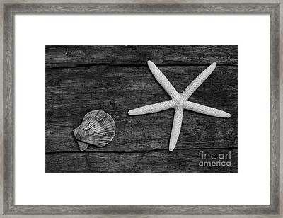 Starfish And Shell On Weathered Wood. Framed Print