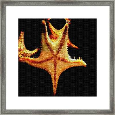 Framed Print featuring the photograph Starfish In Mosaic by Janette Boyd
