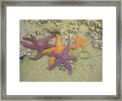 Starfish Love-oregon Coast Framed Print by Cheryl Perin