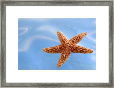 Starfish On Blue Water Framed Print by Carol Leigh