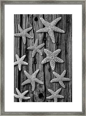 Starfish On Old Wood Black And White Framed Print