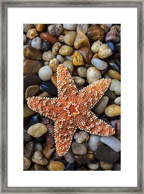 Starfish On Rocks Framed Print by Garry Gay