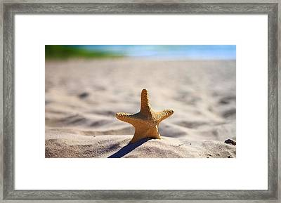 Starfish On The Beach Framed Print