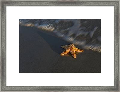 Starfish On The Beach Framed Print by Susan Candelario