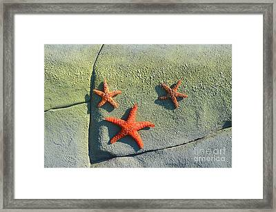 Starfish On The Rocks Framed Print