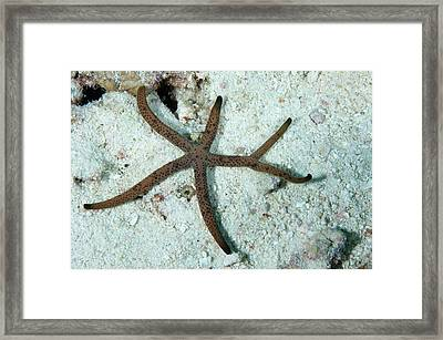Starfish Framed Print by Scubazoo/science Photo Library