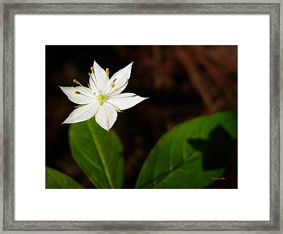 Starflower Framed Print by Christina Rollo