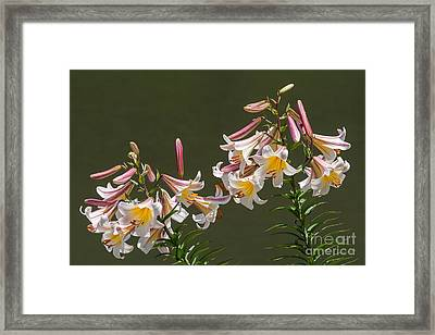 Framed Print featuring the photograph Stargazer Lilies by Dale Nelson