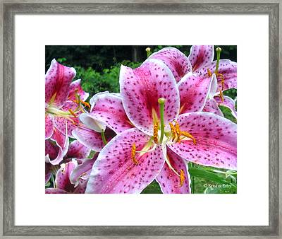 Framed Print featuring the photograph Stargazer  Lilies by Sandra Estes