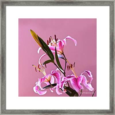 Stargazer Lilies Square Frame Framed Print by Byron Varvarigos