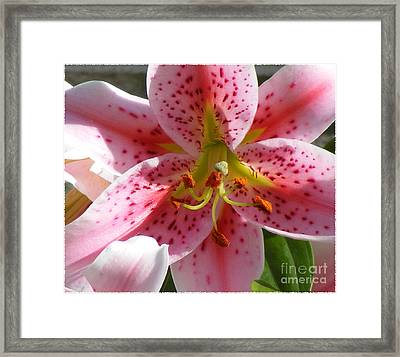 Framed Print featuring the photograph Stargazer Lily by Barbara Griffin