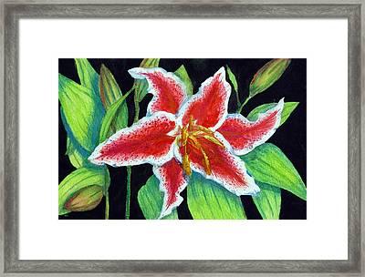 Stargazer Lily Framed Print