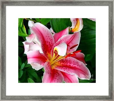 Stargazer Lily Framed Print by Janine Riley