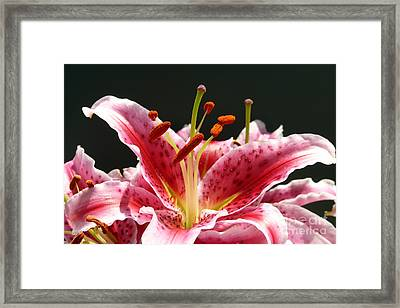 Framed Print featuring the photograph Stargazer Lily by Maria Janicki