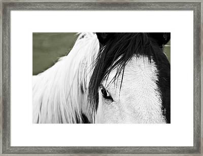 Framed Print featuring the photograph Stargazer by Sandi Mikuse