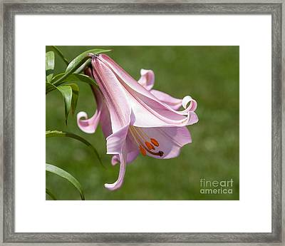 Stargazer Solitaire Framed Print by Dale Nelson
