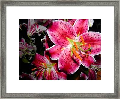 Stargazer Lilies At Night Framed Print