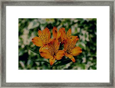 Stargazers Framed Print by Marco Oliveira