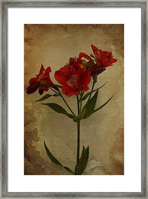 Stargazers On Paper Framed Print by Marco Oliveira