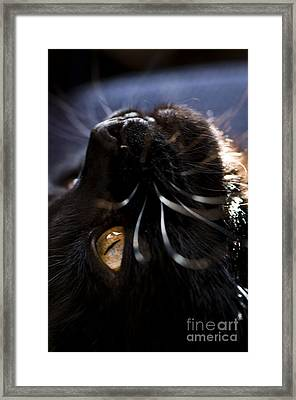Staring At The Ceiling Framed Print