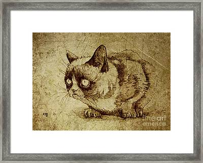 Staring Cat Framed Print by Daniel Yakubovich