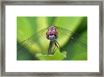 Staring Contest Framed Print by Juergen Roth