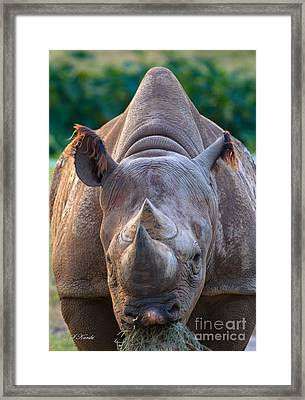 Staring Down Rhino Framed Print