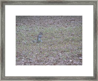 Staring Squirrel Framed Print by Rickey Rivers Jr