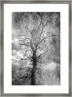 The Dark Side Framed Print by Annette Hugen