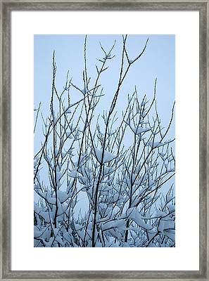 Framed Print featuring the photograph Stark Beauty - Snow On Branches by Denise Beverly