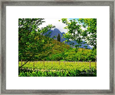 Stark Conde Wine Estate Stellenbosch South Africa 4 Framed Print by Charl Bruwer