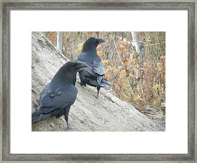 Framed Print featuring the photograph Stark Raven by Brian Boyle