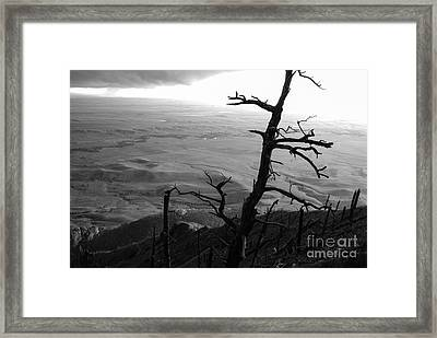 Framed Print featuring the photograph Stark Tree by Mary Carol Story