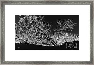Starkly Framed Print by Betty LaRue