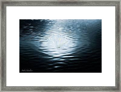 Starlet Of The Water Framed Print by Debra     Vatalaro