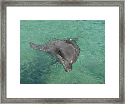 Starlett Dolphin  Framed Print by Mary J Tait