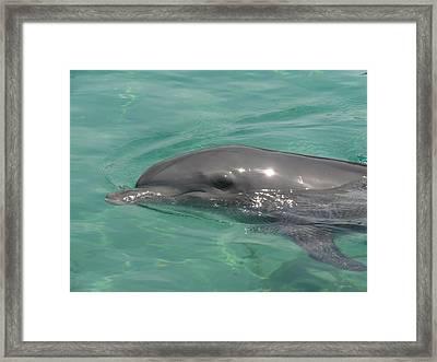 Starlett Dolphin Posing Framed Print by Mary J Tait